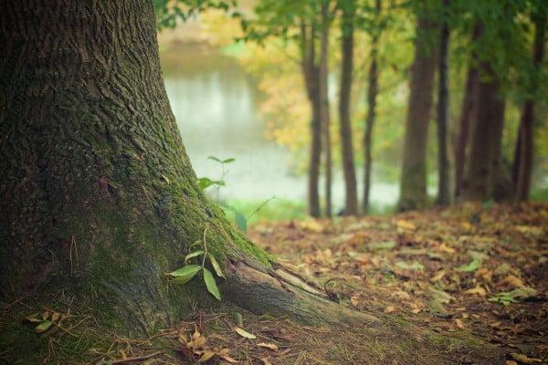 un site acheté, un arbre planté